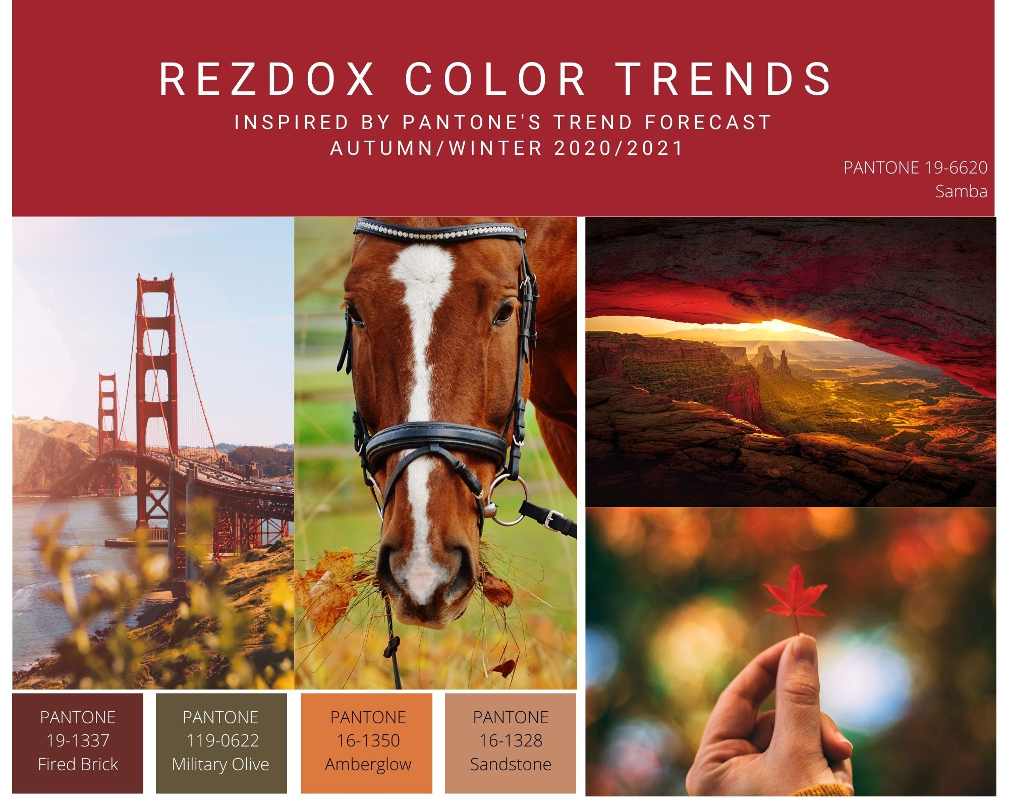 FallColorTrends2020Red.jpg